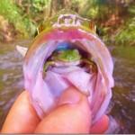 奇跡!釣った魚の中に、生きてるカエルがおったゾ。