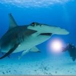 【動画】3m超えのサメを釣ってしまう!しかもこっちはカヤック!w