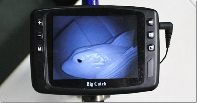 big_catch_monitor4