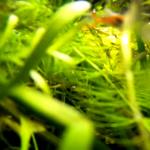 格安ウェアラブルカメラ「Q-camera ACX1」の水中映像も出てきた。悪くないな、うん、悪くない。