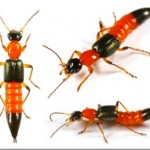 [寄稿] ~この時期、やけど虫に注意です!~ 皆さんはやけど虫ってご存知ですか?