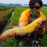 超レアな「黄金ナマズ」が釣り上げられる! 釣ったのはANDMORE(アンドモア)田川慶一郎さん!