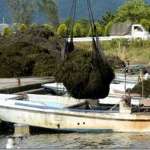 琵琶湖に大量発生する水草、新たなエネルギー源にするプロジェクト進行中。