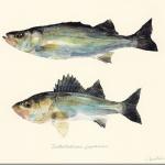 「魚の譜」。アーティスト長嶋祐成さんによって生み出されるサカナたち。