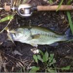 そういえば、チャターはやっぱり良く釣れるという話。~前半~