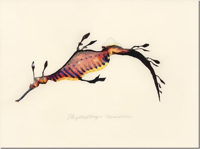 Phyllopteryx_taeniolatus