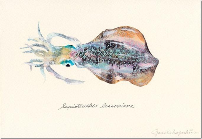 Sepioteuthis_lessoniana-thumbnail2