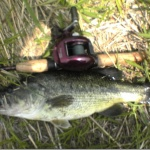 近所なのに全然釣れなかった。牛久沼と「TDスピナーベイト」。
