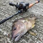 香港・マカオで釣りしてきました。とりあえず釣れた
