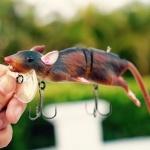 本物のネズミをスキャンした「3D Rat」。Savage Gearからラット型ルアーが登場予定