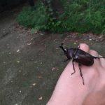 久しぶりに「蛇沼公園」を散策。カブトムシ捕獲!